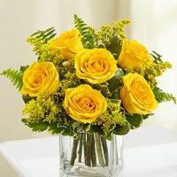 Embrace Yellow